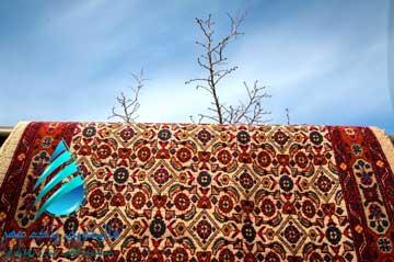 قالیشویی اطراف گمرک