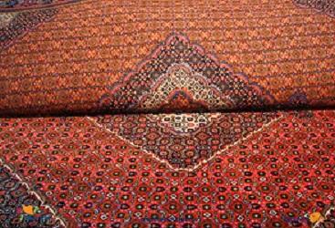 قالیشویی صدر